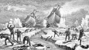 Our fleets have been hunting seals, whales and dolphins since the 1780's
