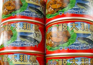whalemeat dolphin foods whale foods canned whale dolphin whale eating